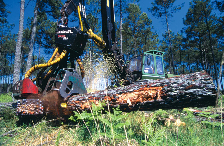 Gascogne Bois, service forêt
